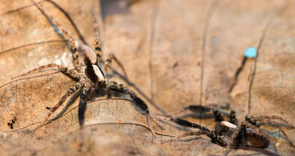 Can Spiders Actually Fly – New Study Reveals the Unexpected