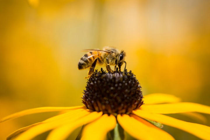 Bees Can Understand The Concept Of Zero, An Australian Study Revealed
