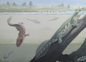 South African Primitive Amphibians Fossils Might Rewrite The Early History Of Life On Land