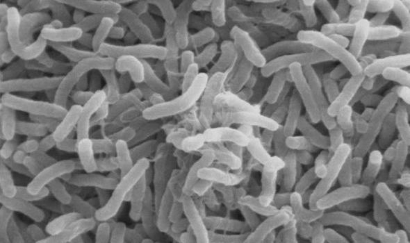 New Study Proves that Bacteria Go Extinct