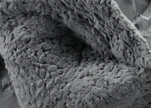 Bacteria-like Fossils have been Discovered in Australia
