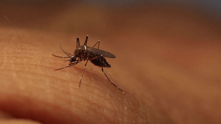 West Nile Virus Reported for the First Time in Hamilton