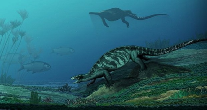 Ancient Turtle With No Shell Reveals Details On Reptile's Evolution