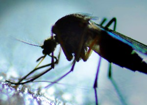 Disease-Carrying Mosquitoes On The Rise In Regina, Saskatchewan, But There's No Danger Of West Nile Virus, Yet
