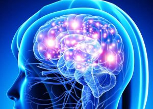 Obesity Might Cause Brain Damage, Recent Studies Revealed