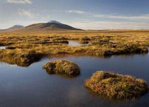 Peatlands To Store More Carbon As The Global Warming Boosts, But Not Forever