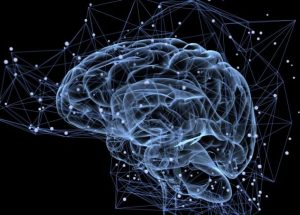 Physical Exercises Help the Brain Produce New Neurons