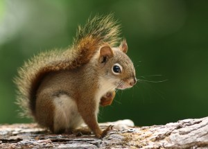 New York Man Died After He Ate Squirrel Brains