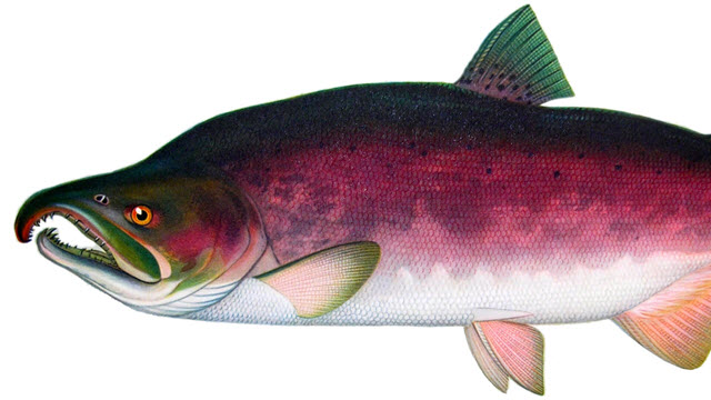 DDT In Alaskan Fish Exposes Children, As Well As Adults, To Higher Cancer Risks