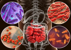 Over 6000 Antibiotic Resistance Genes Discovered In The Gut Bacteria
