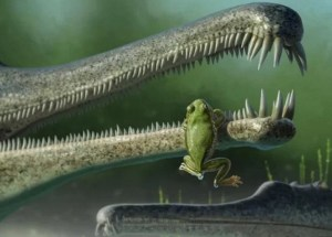 Ancient Frog Relative Found In North America