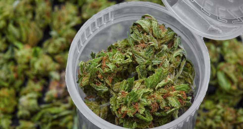 Chronic Pain Is The Leading Cause Of Medical Marijuana Consumption