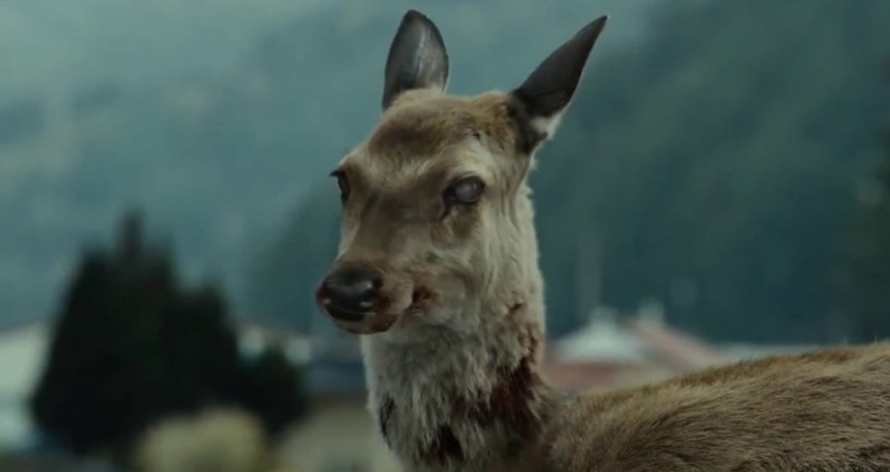 """""""Zombie Deer Disease"""" Spread Across Canada, And It Might Also Affect Humans"""