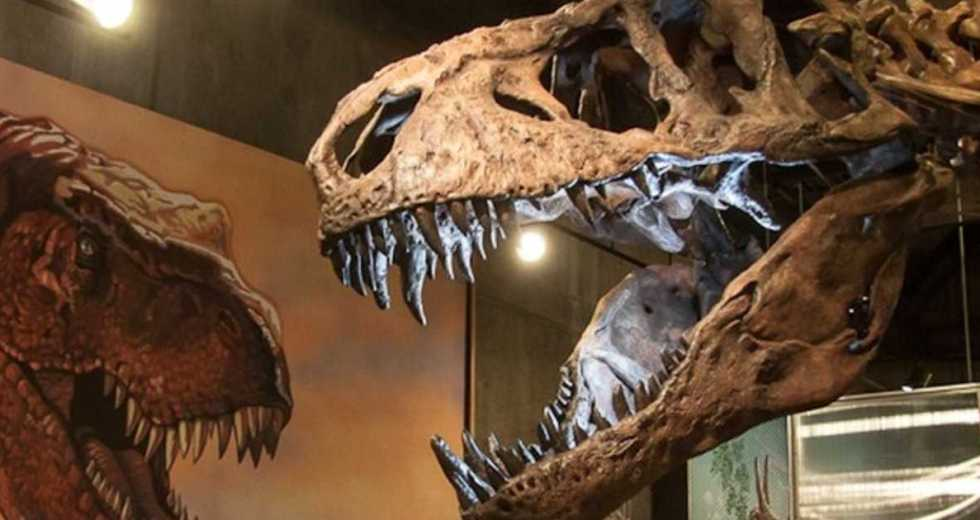 This T-Rex Is the Largest Specimen Ever Known, And Scientists Found It In Saskatchewan