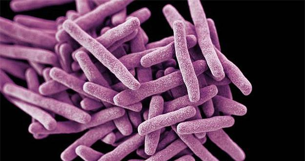 Candida Auris Became An Emerging Threat to Our Health