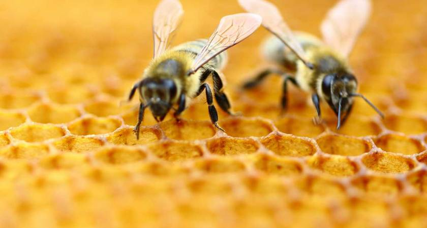 Wild Bee Species Crucial to Pollination Are In Decline