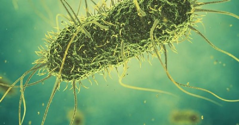 Scientists create living bacteria with largest 'recoded' synthetic genome