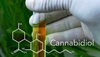 Cannabidiol Could Be Used as a Heroin Addiction Treatment