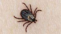 Famous American Actor Struggled With Symptoms of Lyme Disease for 20 Years