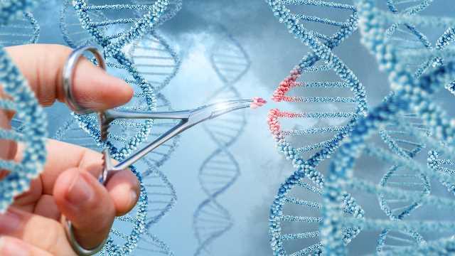 Russians Plan To Create CRISPR-edited Human Embryos