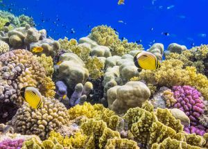 Saving Corals Is Becoming Reality With New Method Found Out By Scientists