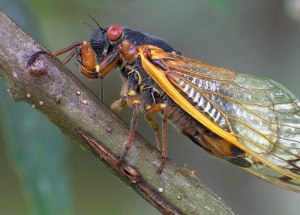 """Deadly Fungus Turns Insects Into """"Zombies,"""" Causing Their Extremities And Genitals To Fall Off"""