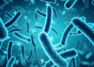 This Gut Bacteria Species Fights Cardiovascular Diseases