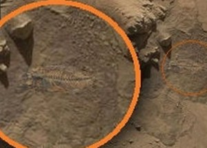 NASA's Curiosity rover captures photo of a fish fossil​ on Mars