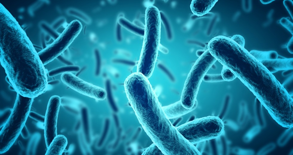 Microbes Are The Key To Improved Health And Slower Aging