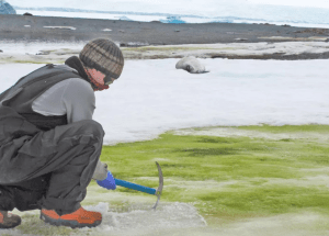 Climate Change Paints Antarctica's Snow Green, Study Says