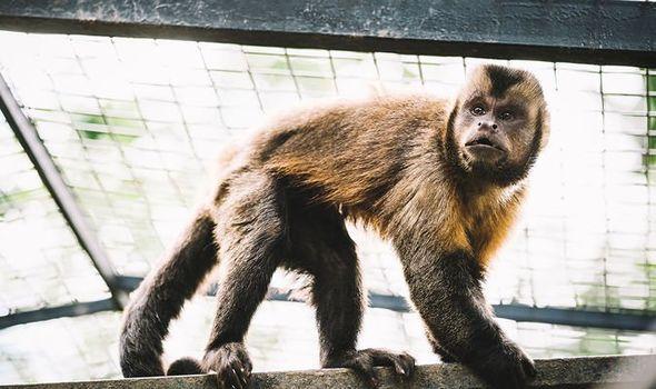 New Study Reveals that Monkeys Develop Immunity to COVID-19