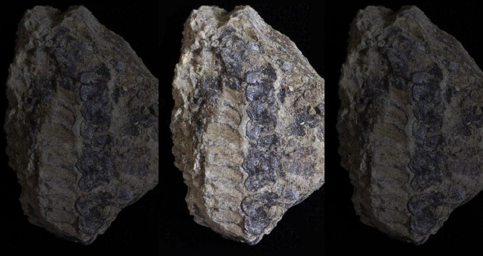 Evolutionary History Might Change As The Scientists Found A 400-million-year-old Plant Fossil