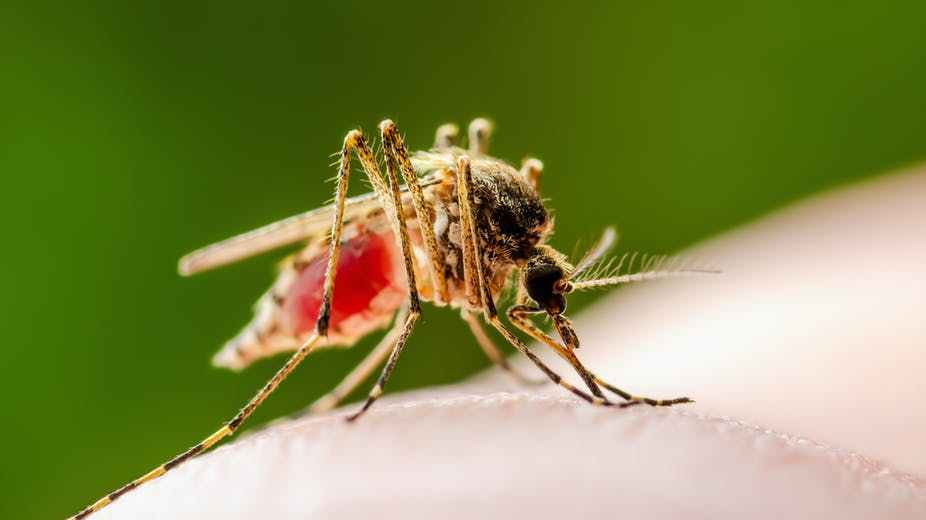 Michiganders Must Stay Inside To Prevent Spreading A Novel Mosquito-Borne Disease!