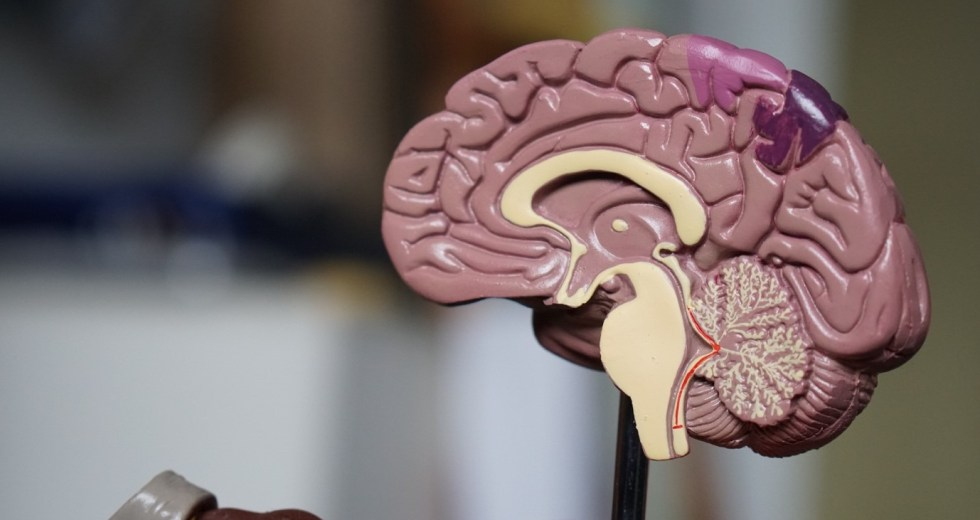 How a Mild Brain Injury Can Scramble Your Life
