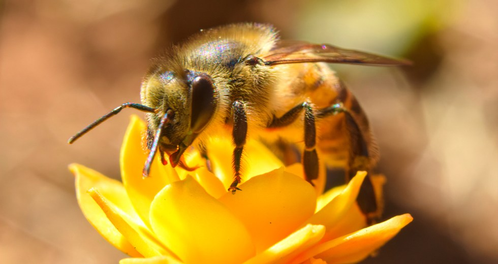 How Bees Are Using Animal Poo as a Defence Mechanism