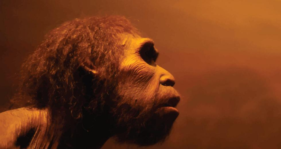 Mini Brains Found Within A Neanderthal Gene Shows Traces Of Human Evolution