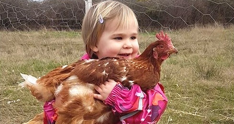 Experts Demand Extra Carefulness with Chickens Amid Salmonella Outbreak