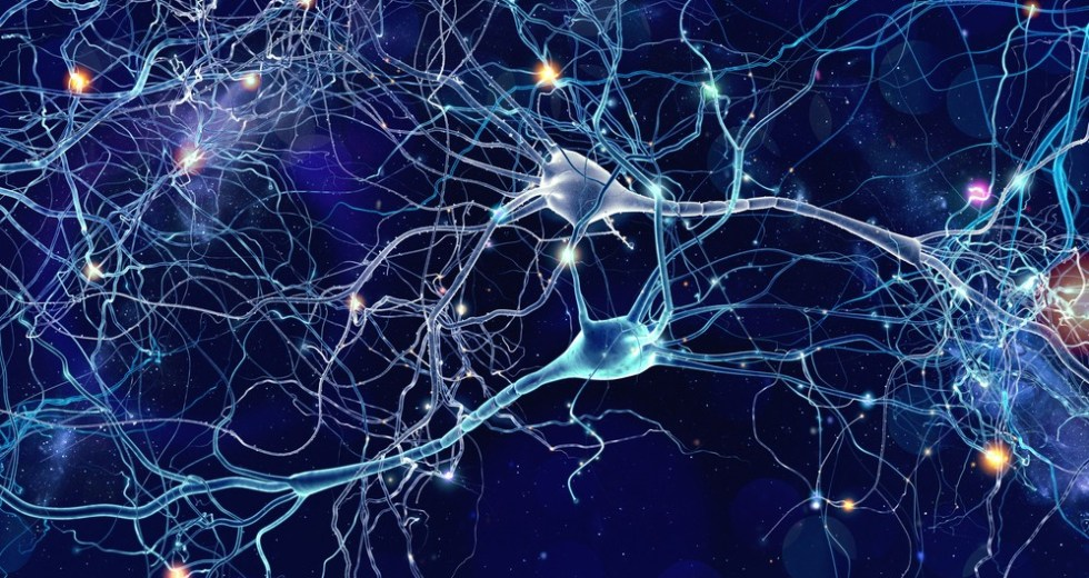 A Unique Type Of Signal Discovered In The Human Brain