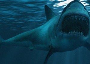 Huge Megalodon Mega-Shark Likely Bigger Than Anyone Thought
