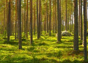 New Study Shows How Global Demands Trigger Deforestation