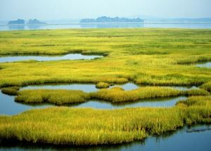 Coastal Marshes Might Drown Faster Than Previously Believed, New Study Finds