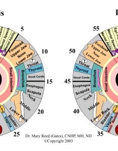 Iridology chart also eyes speak everything  health tips ever magazine rh healthtipsever