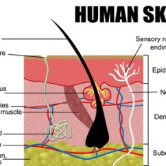 What Causes Acne Diagram 99 Jeep Grand Cherokee Laredo Radio Wiring Healthy Skin Care