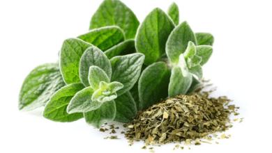 Photo of فوائد نبات الاوريجانو الصحية