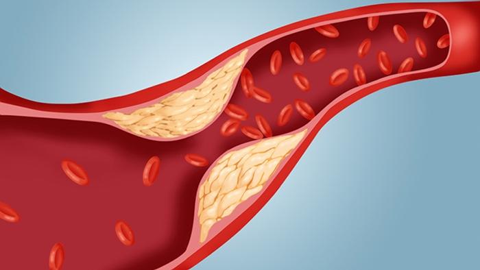 ما هي فوائد الكوليسترول؟