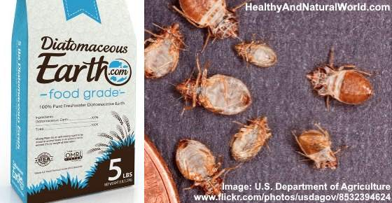 How to Effectively Kill Bed Bugs Using Diatomaceous Earth (DE)