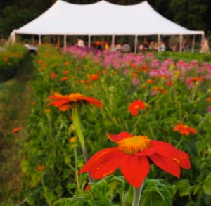 Tent w-orange flowers cropped