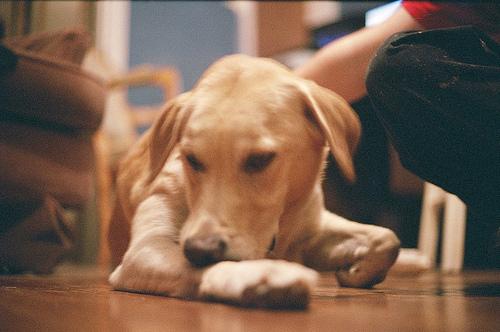 Dog Allergies Treatment