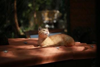 Cat in Pet Friendly Yard