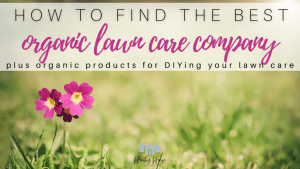 How to Find the Best Organic Lawn Care Company